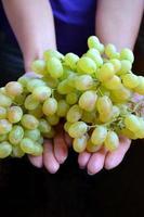 mãos segurando uvas verdes doces foto