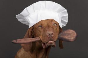 chef de cão de raça pura