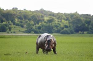 parque nacional de chobe - botsuana foto