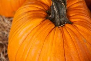 close-up de grande abóbora laranja. plano de fundo para outono, outono