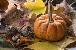 sceme de abóbora de outono foto