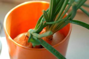 cebolas verdes foto