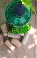 garrafa de vinho branco, jovem videira no jardim foto
