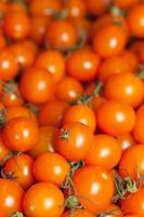 mini tomates colhidos foto