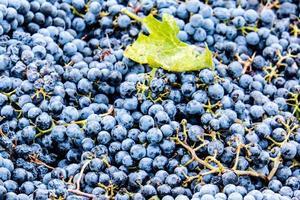 balde de uvas foto