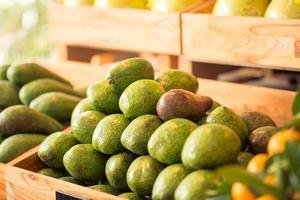 abacates frescos foto