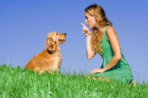treinamento canino foto