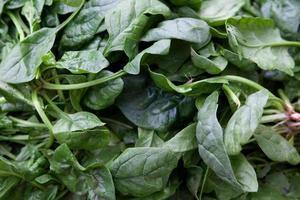 espinafre fresco de folhas verdes foto