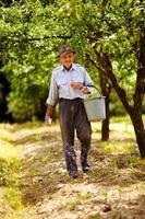 velho fazendeiro fertilizando em um pomar
