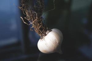 bulbo de alho foto
