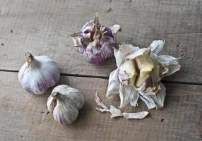 bulbos de alho fresco foto