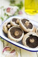 cogumelos chatos foto