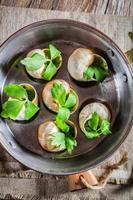 caracóis saborosos com manteiga de alho foto