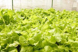 agrícola foto