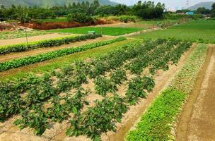 campo agrícola foto