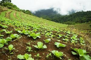 cama de legumes na montanha foto