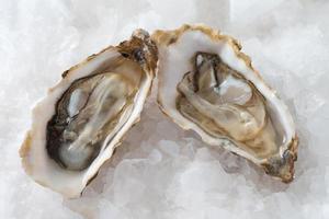 ostras aperitivo francês foto