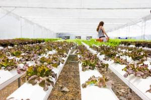 fazenda de vegetais hidropônica na Tailândia foto