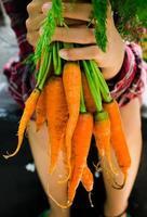 mãos segurando cenouras frescas cruas foto