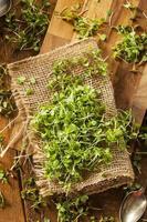 microgreens de rúcula verde crua foto