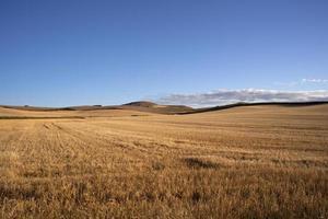 campo espanhol foto
