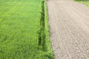 campo de trigo e terra arada foto