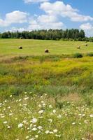 paisagem de verão