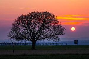 silhueta da árvore foto