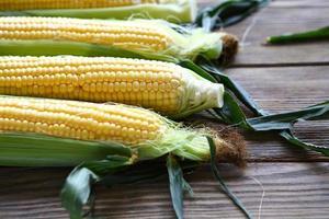 espigas de milho doce fresco foto