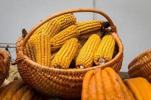 cesta cheia de espigas de milho e abóboras foto