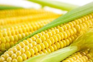 espiga de milho com folhas foto