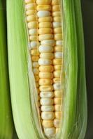 espiga de milho entre folhas verdes foto