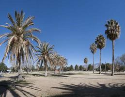 parque lamadera, tucson, arizona foto