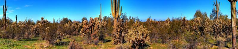 panorama de cacto do saguaro do deserto foto