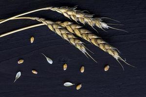 espigas de trigo e sementes em madeira escura foto