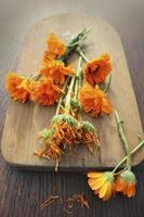 flores de calêndula de ervas frescas e secas foto