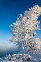 rio inverno foto