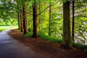 árvores ao longo de um caminho no parque de piedmont, em atlanta, geórgia. foto