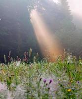 nascer do sol de verão