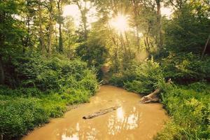 riacho de verão