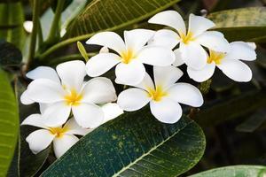 flores amarelas do verão foto