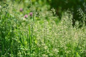 fundo de grama de verão foto