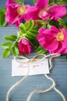 flores rosa mosqueta foto