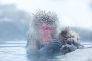 macaco macaco da neve onsen