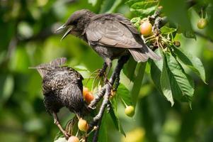 dois pássaros na árvore foto