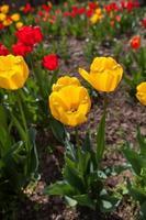 sonho de primavera foto