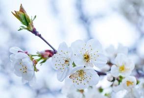 árvore primavera foto