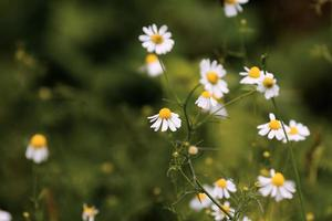 flores primavera