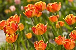 jardim primavera foto