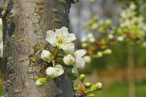 floração da primavera foto